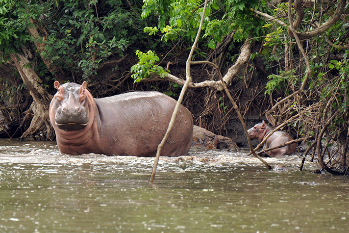 DSC_3912-mother-hippo-and-baby.jpg